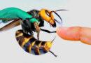 خمسة من أخطر الحشرات في كندا و ما هي أعراض عضاتها